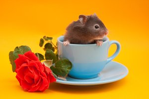 Hamster in the cup