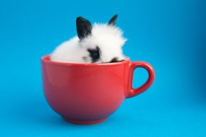 Rabbit in the cup