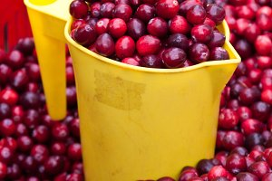 Cranberries in a box