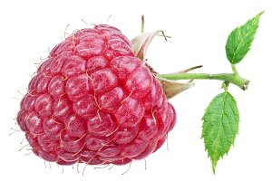 Raspberry on a white background.