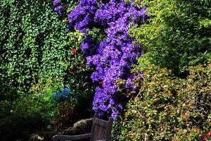 Beautiful Spring Garden, UK