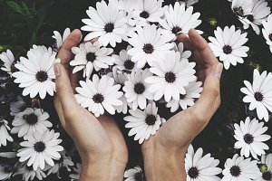 Female hands holding flowers