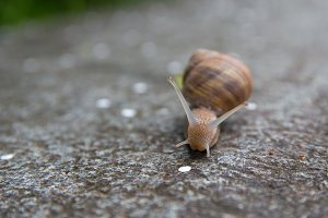 snail at concrete wall