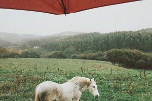 White horse under umbrella