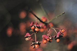Blurred Blossoms in Autumn/Fall