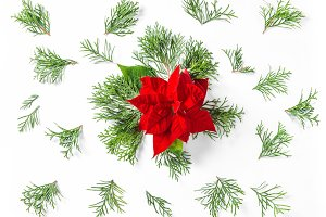 Christmas flower Poinsettia Flat lay