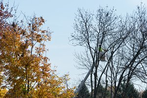 Man cutting down tree branches