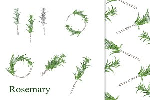 Rosemary hand drawn 50% OFF