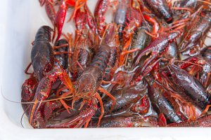 crawfish or red Lobster Claws