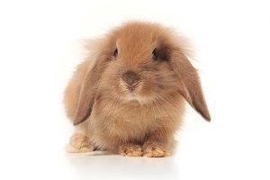 Little bunny isolated
