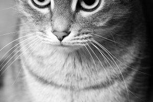 a striped domestic cute cat