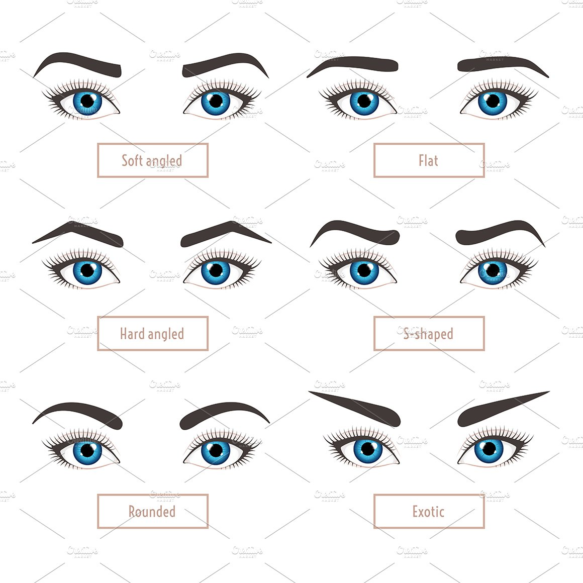 1051598 6 Basic Eyebrow Shapes. Captions on Basic Shape Page