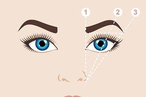 Eyebrow scheme. Shape of brow.
