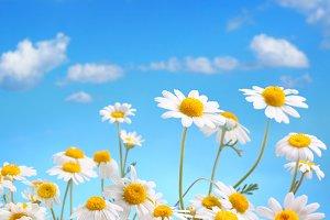 Daisy bouquet on blue sky background