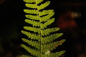 Leaf of fern in the nature