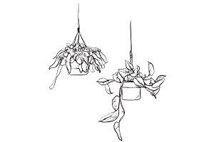 Flowerpot sketch