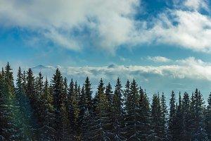Mountain trees.