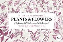 40 Flower & Plant Illustrations No.4