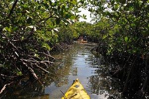 Kayaking in Mangroves
