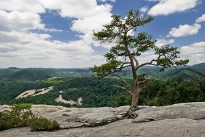 Lone Tree on Mountain