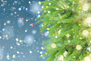 with fir tree and snow