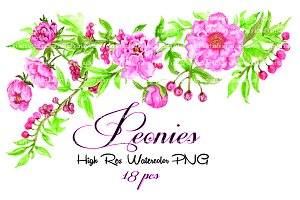 Peonies Watercolor Peonies