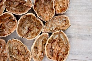big walnut shells