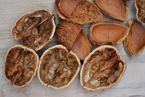 almond shells and walnut shells