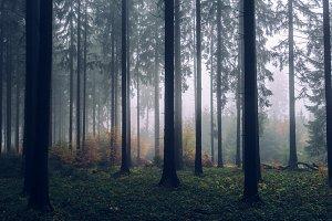 Foggy Autumn Forest #01