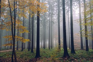 Autumn Colors in Foggy Forest