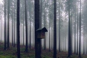 Foggy Autumn Forest #04