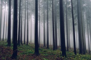 Foggy Autumn Forest #05