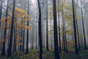 Foggy Autumn Forest #07