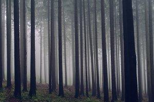 Foggy Autumn Forest #08