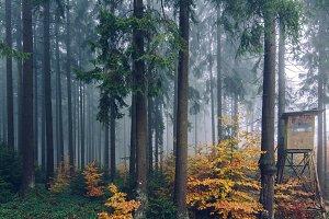 Foggy Autumn Forest #10