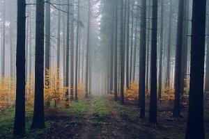 Foggy Autumn Forest #11