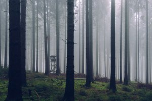 Mysterious Forest in Spring Fog