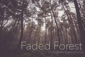 Faded Autumn Forest 31 Photo Pack