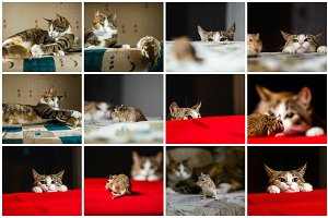 Cat&Mouse 25 Photos. Each only 2$.