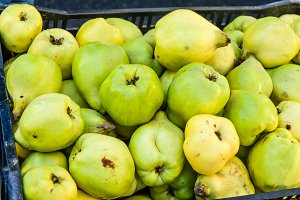 Freshly picked quince fruits