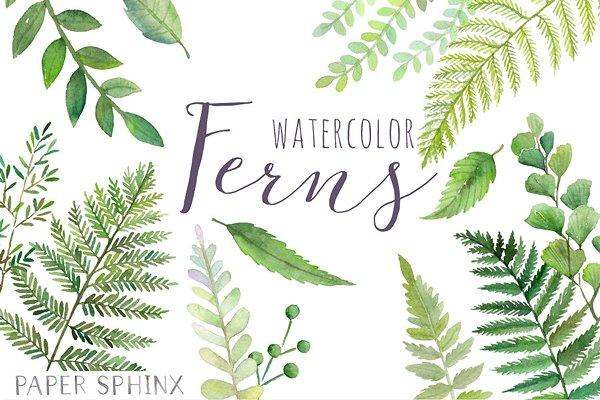 Watercolor Fern Leaf Pack