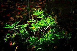 Mystical plant