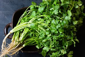 Bunch of fresh cilantro on black background