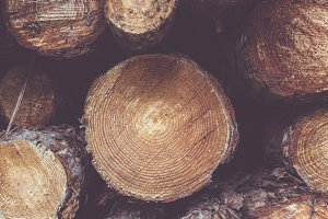 Stacked Wood Treetrunks