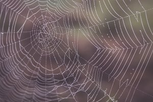 Dew on a spiderweb in the Fall