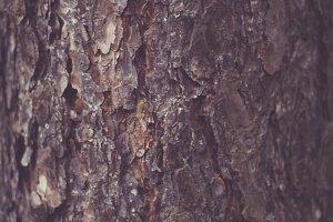 Maple Tree Bark