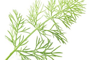 Green dill isolated on a white
