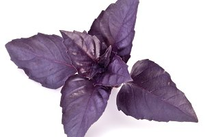 Violet basil leaves isolated on a white.