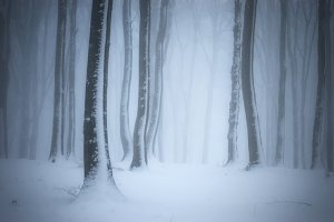 Winter forest background with fog