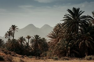Desert place with palm trees